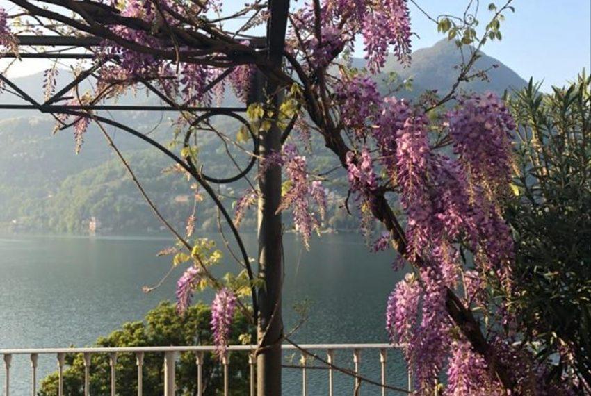13. Beautiful flowers and plants Lake Como