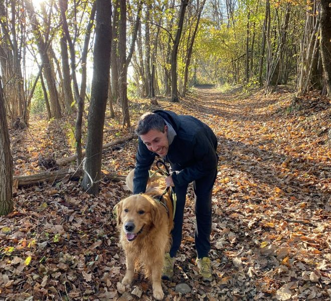 Walking in the nature with dogs